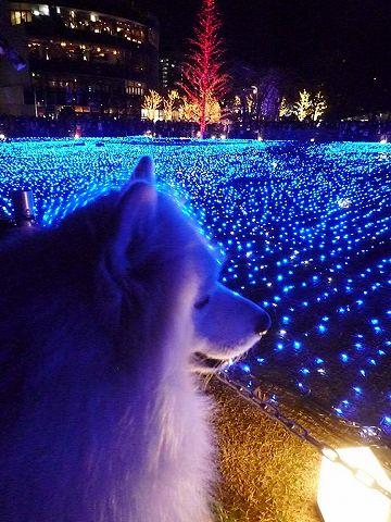 偶然クリスマス♪_c0062832_1831083.jpg