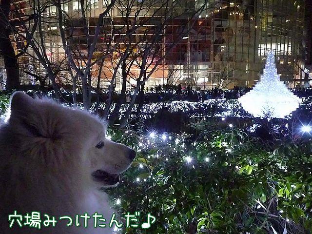 偶然クリスマス♪_c0062832_1832324.jpg