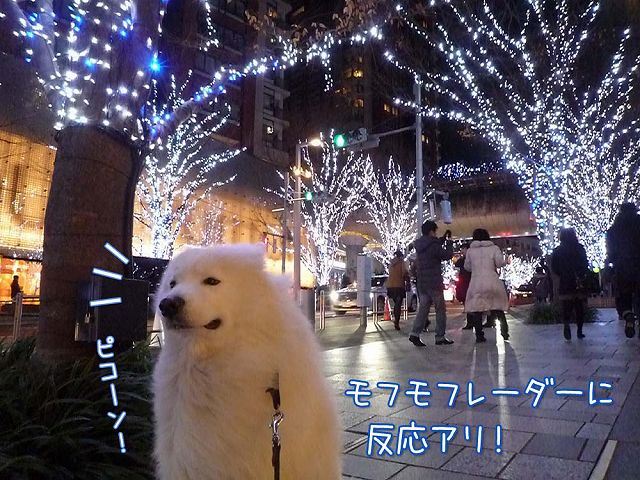 偶然クリスマス♪_c0062832_1833258.jpg