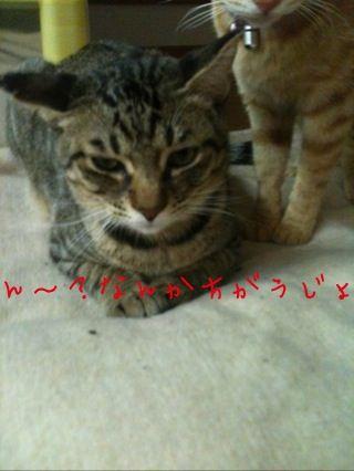 d0195734_2011320.jpg