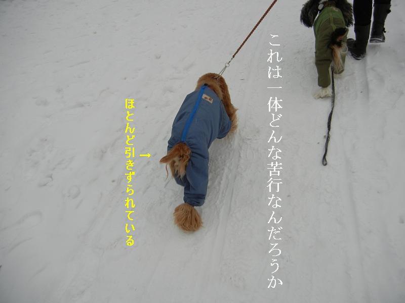 c0015041_6264768.jpg