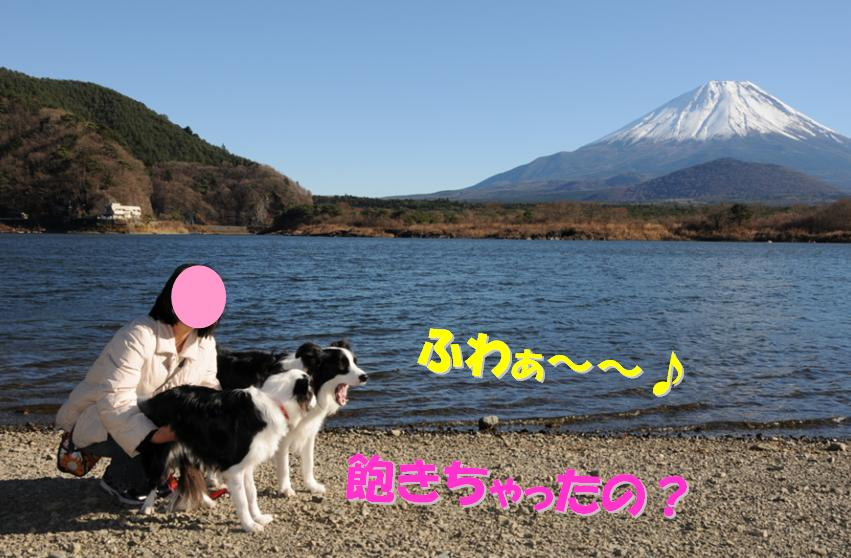c0147241_20303842.jpg