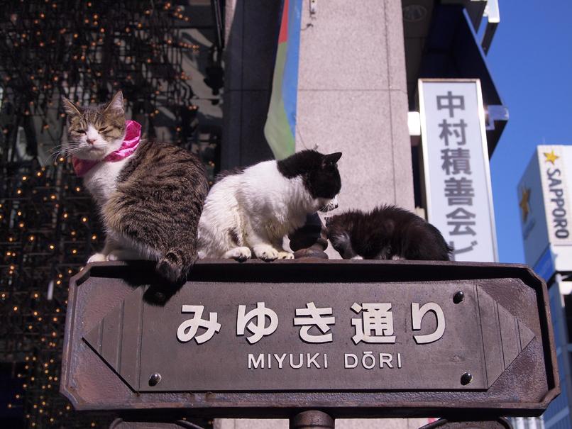 迷い猫_a0100959_22354727.jpg