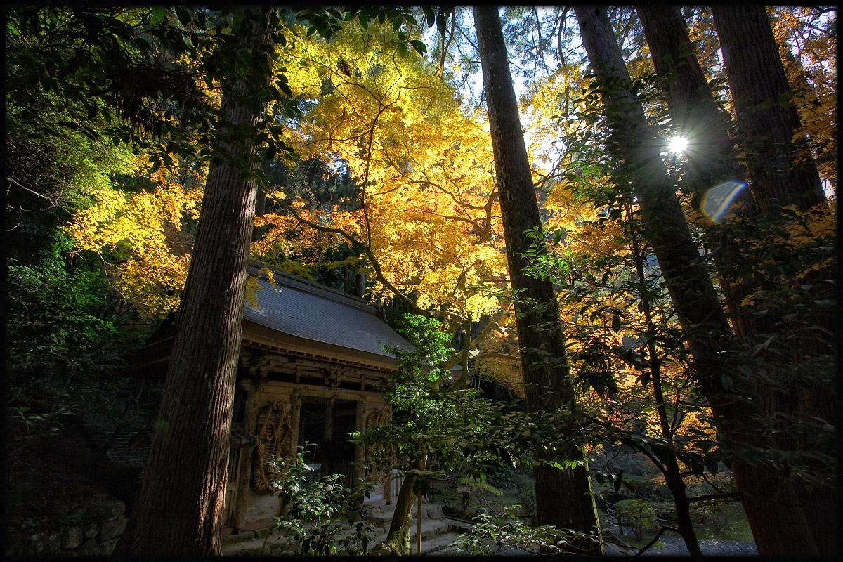 紅葉 2010 <百済寺> 3_f0021869_039947.jpg