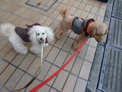 2010.12.26 おさんぽ_a0083571_23224692.jpg