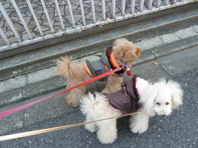 2010.12.26 おさんぽ_a0083571_23301159.jpg