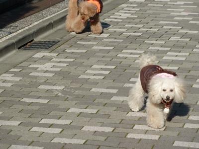 2010.12.26 おさんぽ_a0083571_23314627.jpg