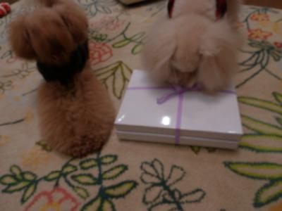 2010.12.26  わーい、クリスマスプレゼントだ!!_a0083571_875026.jpg