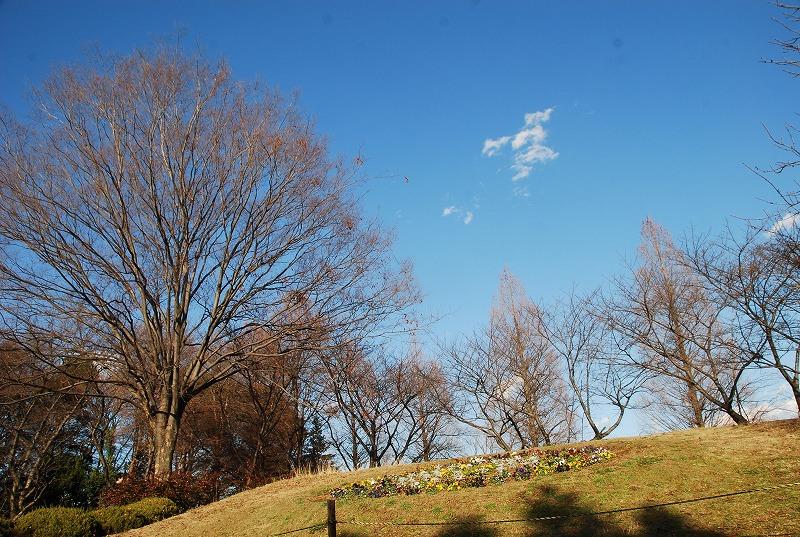 冬の大崎公園他_c0187781_2242235.jpg
