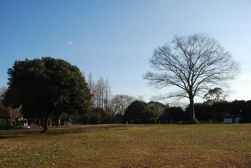 冬の大崎公園他_c0187781_2245448.jpg