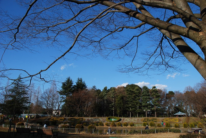 冬の大崎公園他_c0187781_2253365.jpg