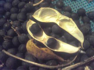 黒豆、脱穀。_a0138985_0402581.jpg