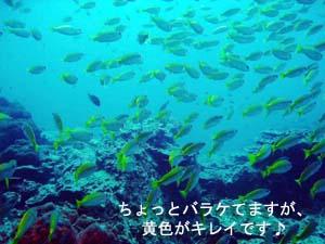 プーケットは何度目?でもピピ島は初めて♪_f0144385_22333696.jpg