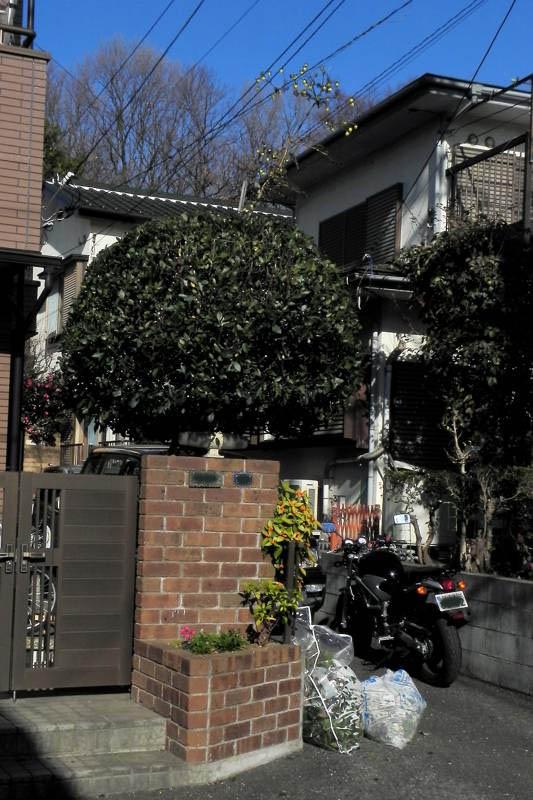 ベニマシコ♀/庭木の刈り込み_b0024798_6413310.jpg