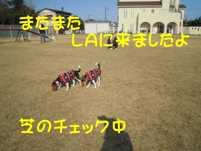 c0166622_738038.jpg