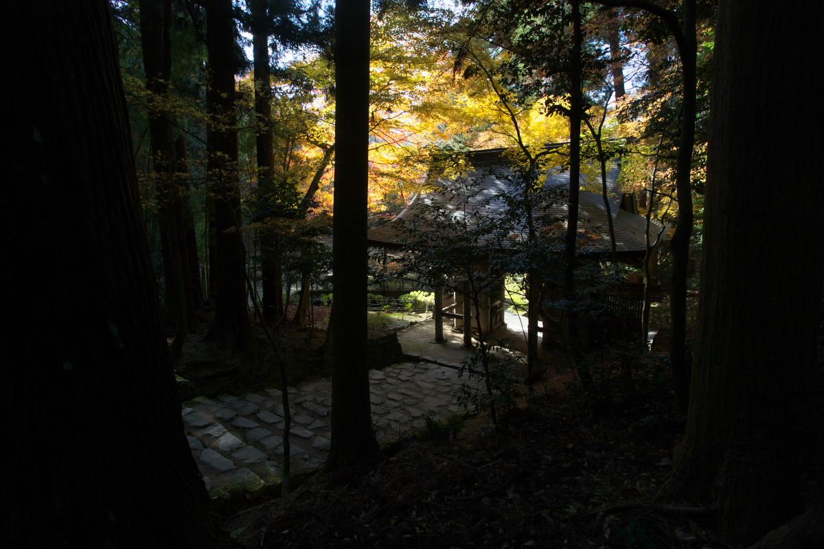 紅葉 2010 <百済寺> 5_f0021869_2347771.jpg