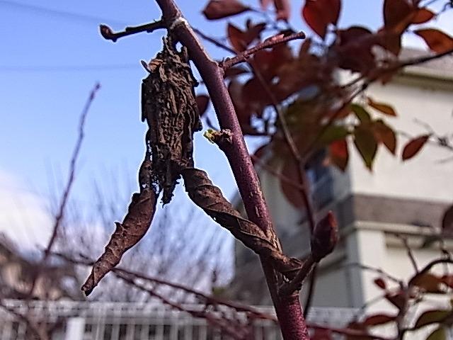 虫の冬越し_e0181373_2014921.jpg