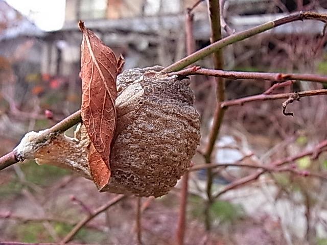 虫の冬越し_e0181373_2021086.jpg