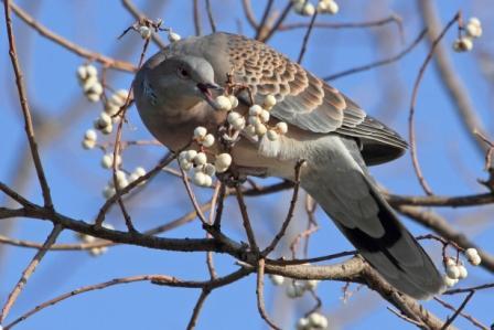 ★先週末の鳥類園(2010.12.25~26)_e0046474_1354269.jpg
