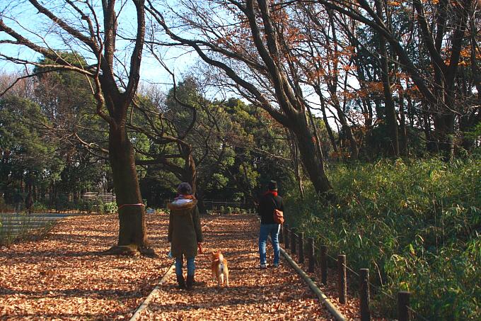都立小山内裏公園 冬景色 おまけ_e0165983_13265556.jpg