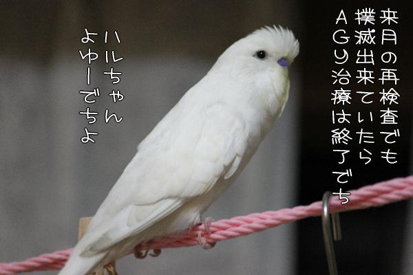 b0062090_0355712.jpg