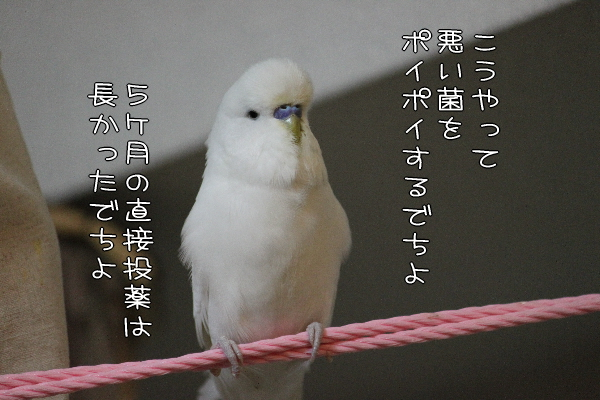 b0062090_044670.jpg