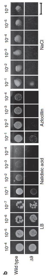 ウイルス遺伝子をゲノムに取り込み進化するバクテリア_c0025115_19304483.jpg