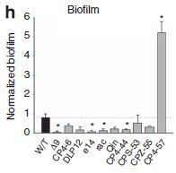 ウイルス遺伝子をゲノムに取り込み進化するバクテリア_c0025115_1941255.jpg