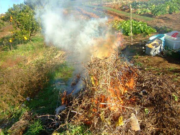 今年最後の農園.....正月野菜を収穫!_b0137932_1021498.jpg