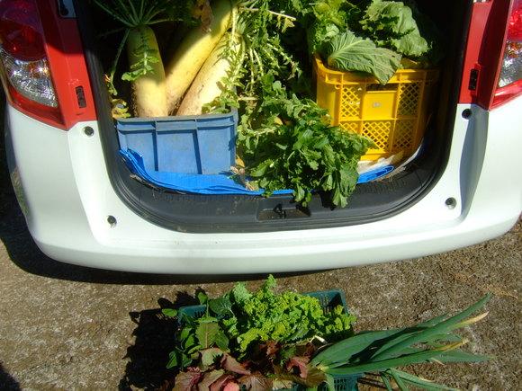 今年最後の農園.....正月野菜を収穫!_b0137932_10274334.jpg