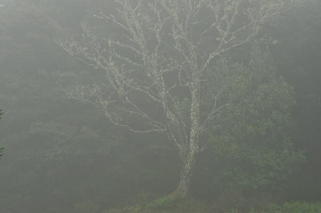 夏なのに、さーむいセントラルハイランド_f0050534_12215260.jpg