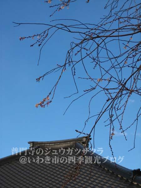 f0105342_1520311.jpg