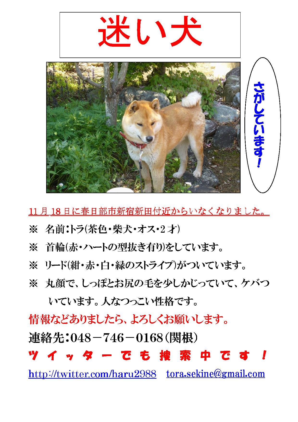 埼玉県春日部市で迷子犬捜索中です。ご協力お願いします!_a0126743_0231958.jpg