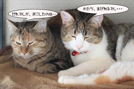 今日の保護猫さん達と切ない・・・・。_e0151545_22472236.jpg