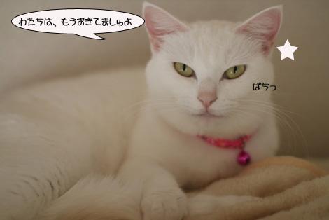 今日の保護猫さん達と切ない・・・・。_e0151545_22474556.jpg