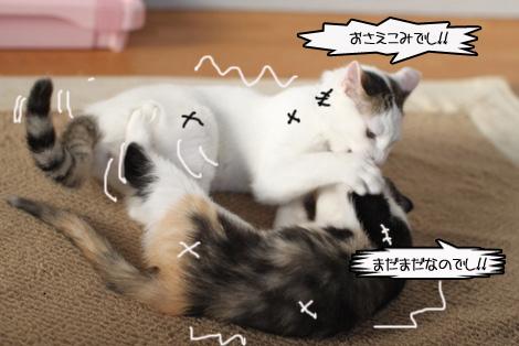 今日の保護猫さん達と切ない・・・・。_e0151545_22482384.jpg