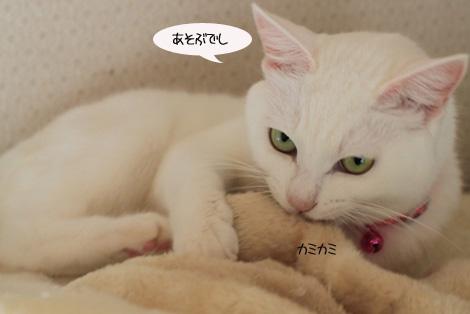 今日の保護猫さん達と切ない・・・・。_e0151545_2248351.jpg