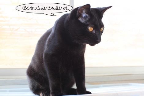 今日の保護猫さん達と切ない・・・・。_e0151545_22484023.jpg