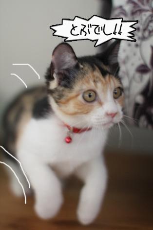 今日の保護猫さん達と切ない・・・・。_e0151545_22485930.jpg