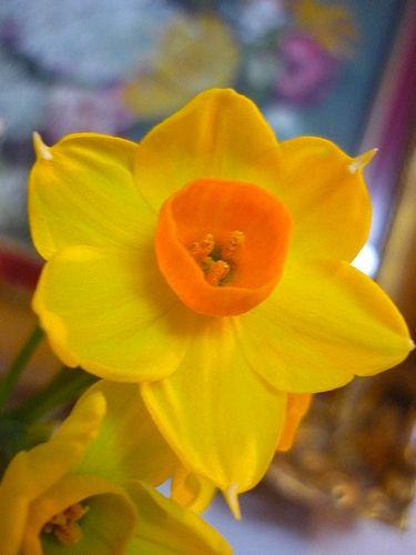 迎え花 の 贈り物 と 可憐な水仙*。。*。:☆.。† _a0053662_20574666.jpg