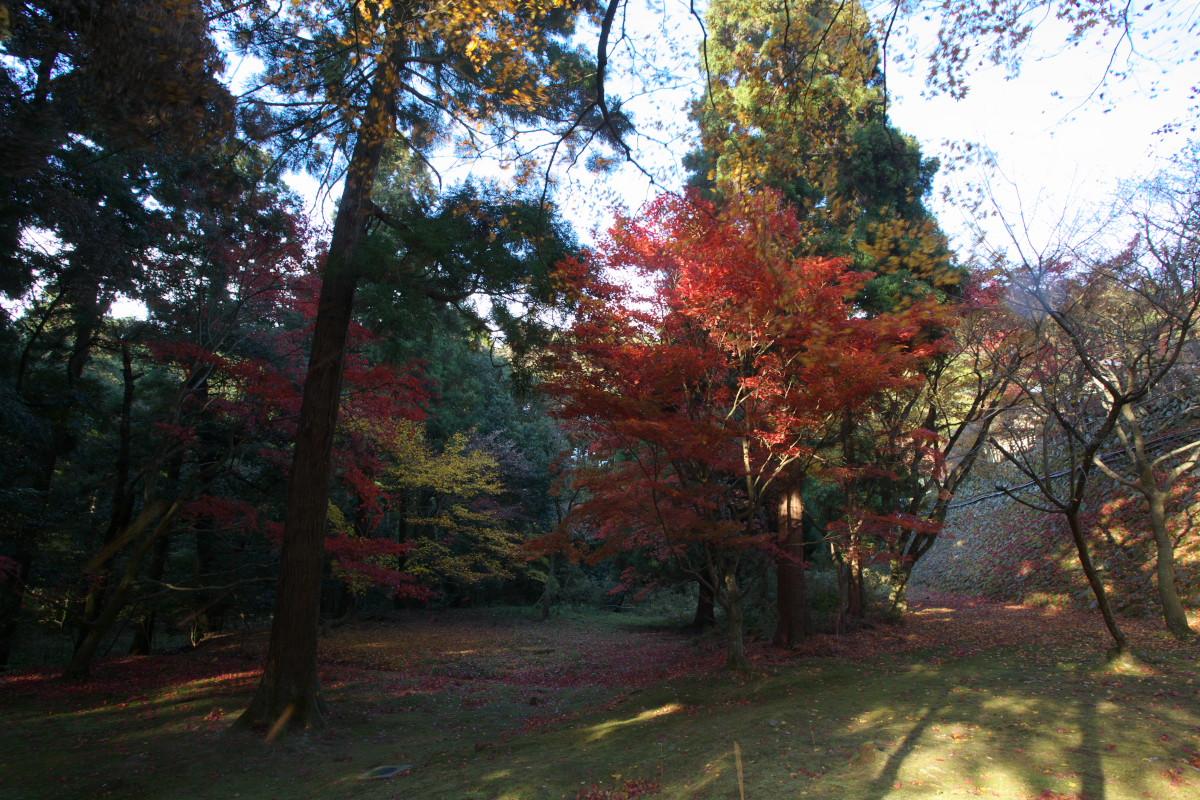 紅葉 2010 <西明寺> 1_f0021869_23274712.jpg