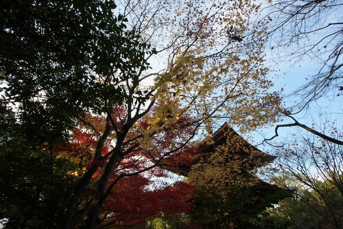 紅葉 2010 <西明寺> 1_f0021869_23281360.jpg