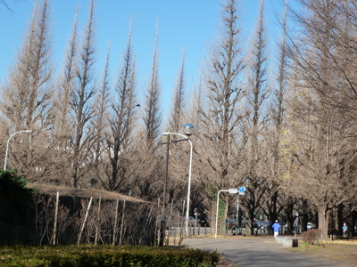 2010.12.27  神宮外苑散歩_a0083571_0301065.jpg