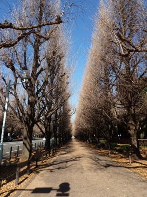 2010.12.27  神宮外苑散歩_a0083571_0305890.jpg