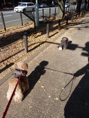 2010.12.27  神宮外苑散歩_a0083571_0313623.jpg