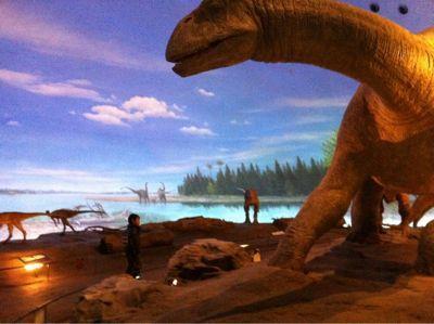 恐竜博物館_d0028272_20371175.jpg