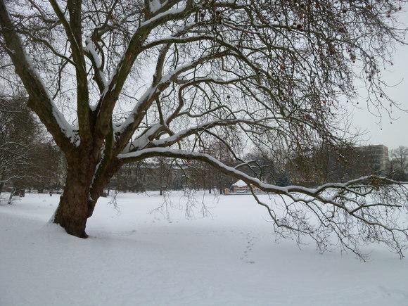 (続)雪。雪。雪_c0180686_22214076.jpg