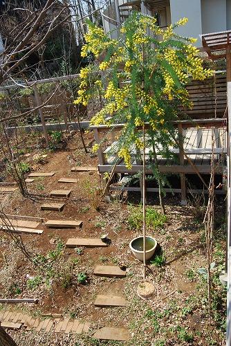 2010年の庭…_c0124100_22514855.jpg