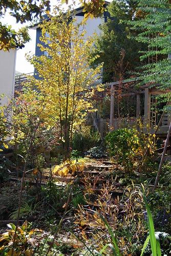 2010年の庭…_c0124100_23132277.jpg