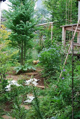 2010年の庭…_c0124100_231578.jpg